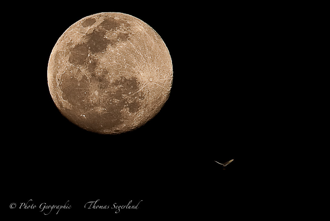 Photograph Butterfly flies to the moon by Thomas Segerlund on 500px