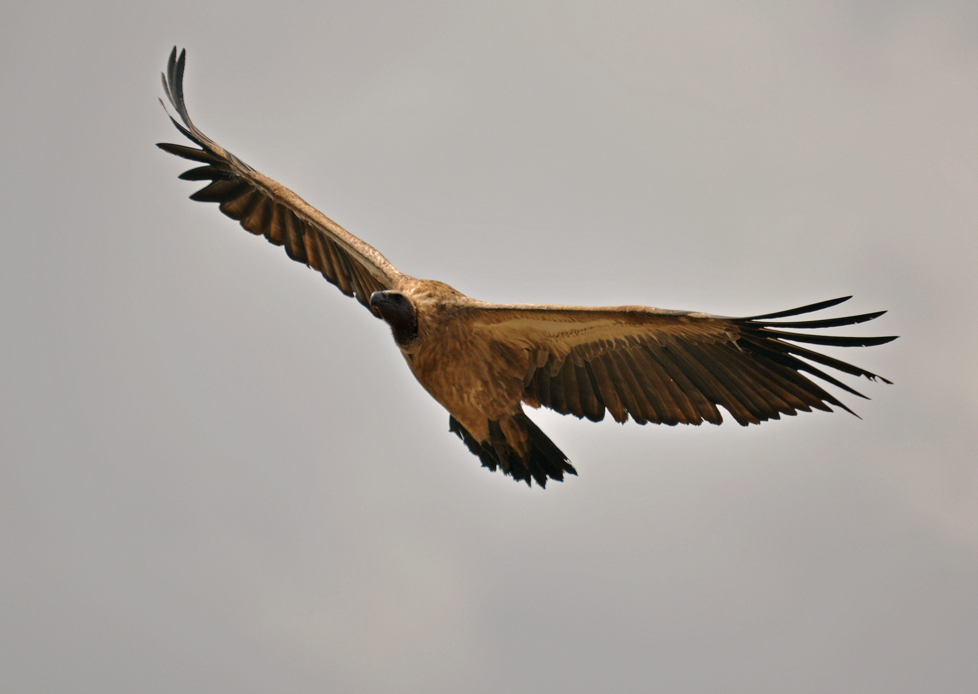 Photograph Swooping overhead by Graham Turner on 500px