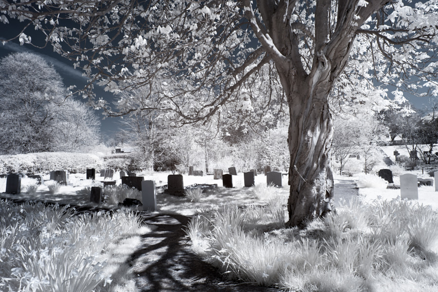 Spring Graveyard in Infrared