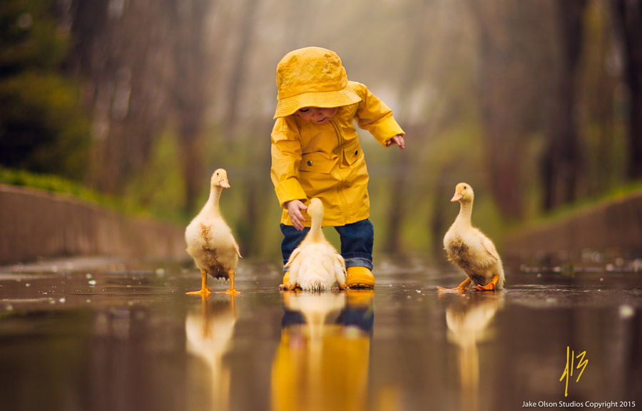 Three Little Ducks by Jake Olson Studios