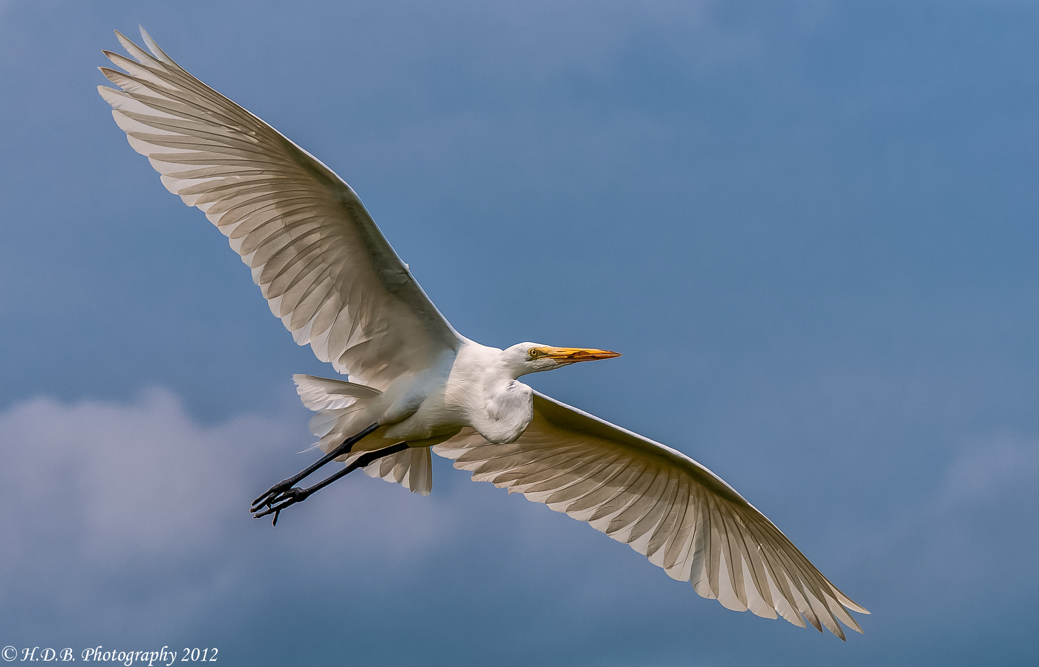 Photograph Soar by Harold Begun on 500px