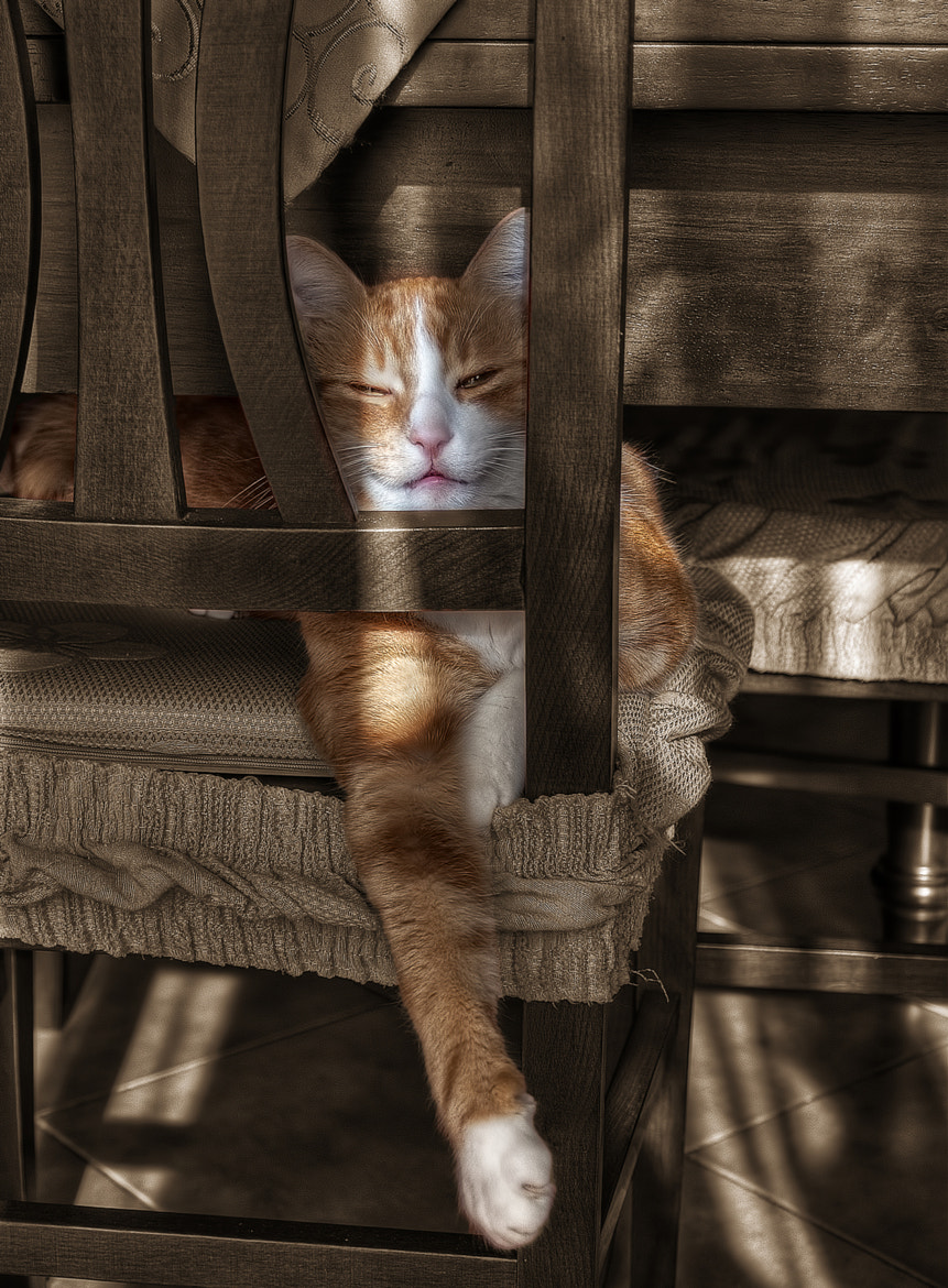 Photograph cat 4 by Leonardo Marangi on 500px