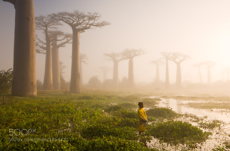 Photograph The Swamp by Marsel van Oosten on 500px