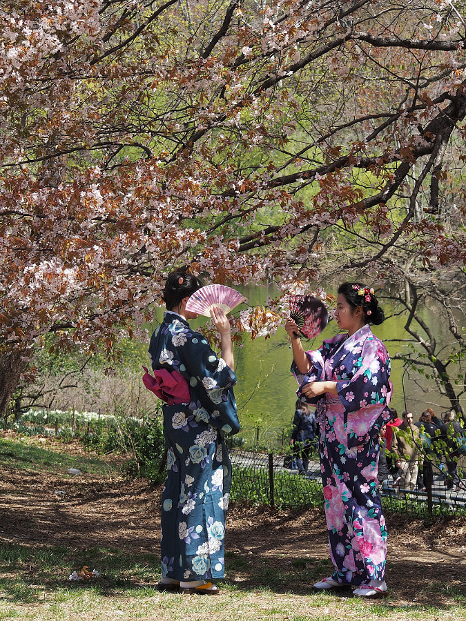 Photograph Cherry Blossoms & Kimonos by Nancy Lundebjerg on 500px