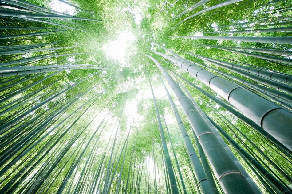 Photograph Bamboo Light by Takeshi Marumoto on 500px