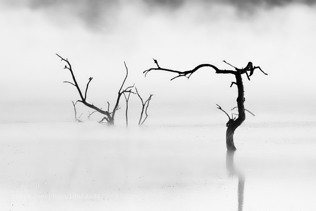 Photograph Misty Silhouette by Stu Bowie on 500px