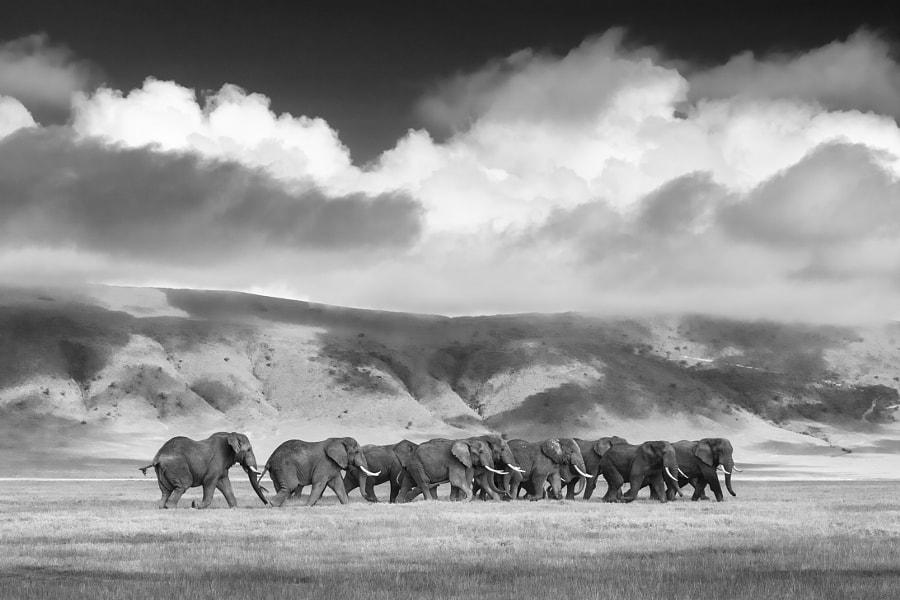 Elephants in Ngorongoro Crater