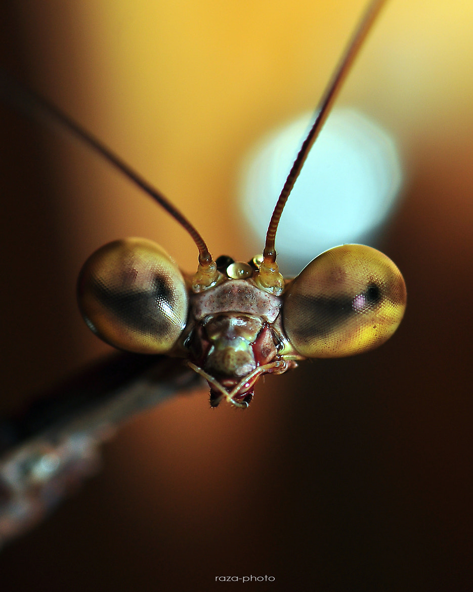 Photograph See U Again MR Mantis by Razali Ahmad on 500px
