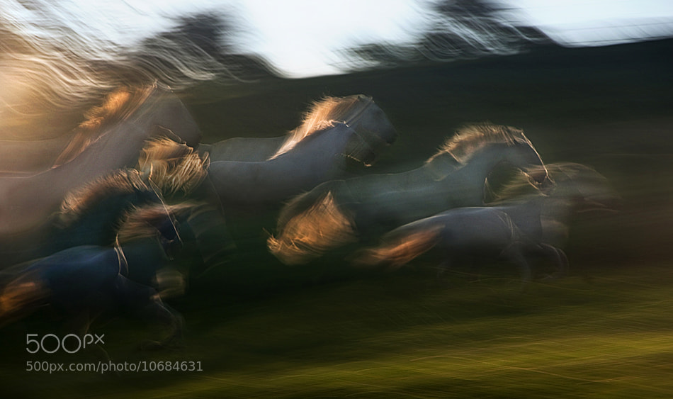 Photograph morning race by Milan Malovrh on 500px