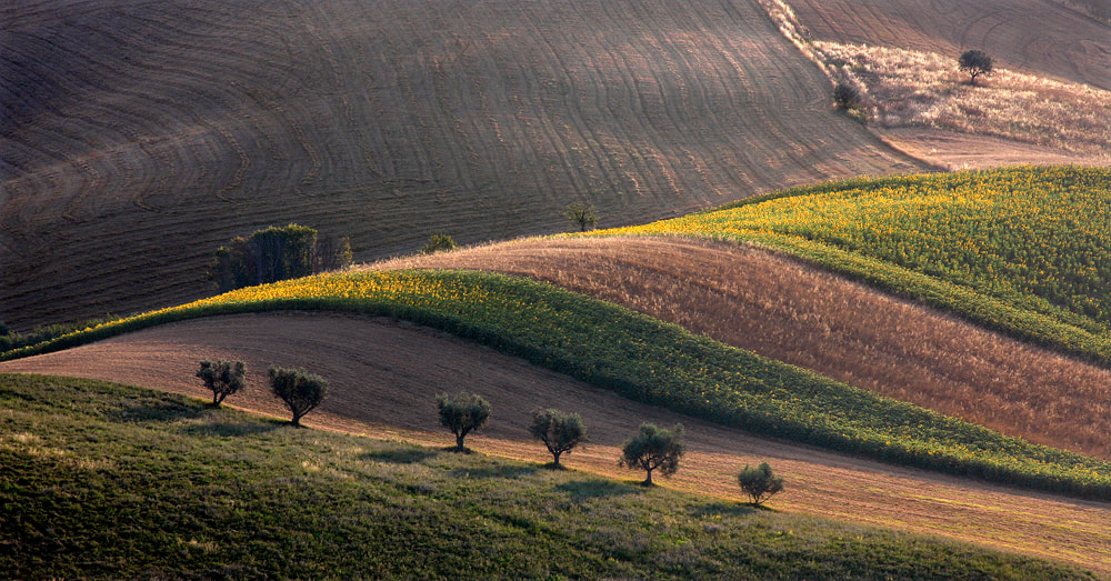 Photograph first light by ivo pandoli on 500px