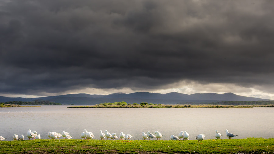 Photograph Seagulls by the lake by Travis Chau on 500px