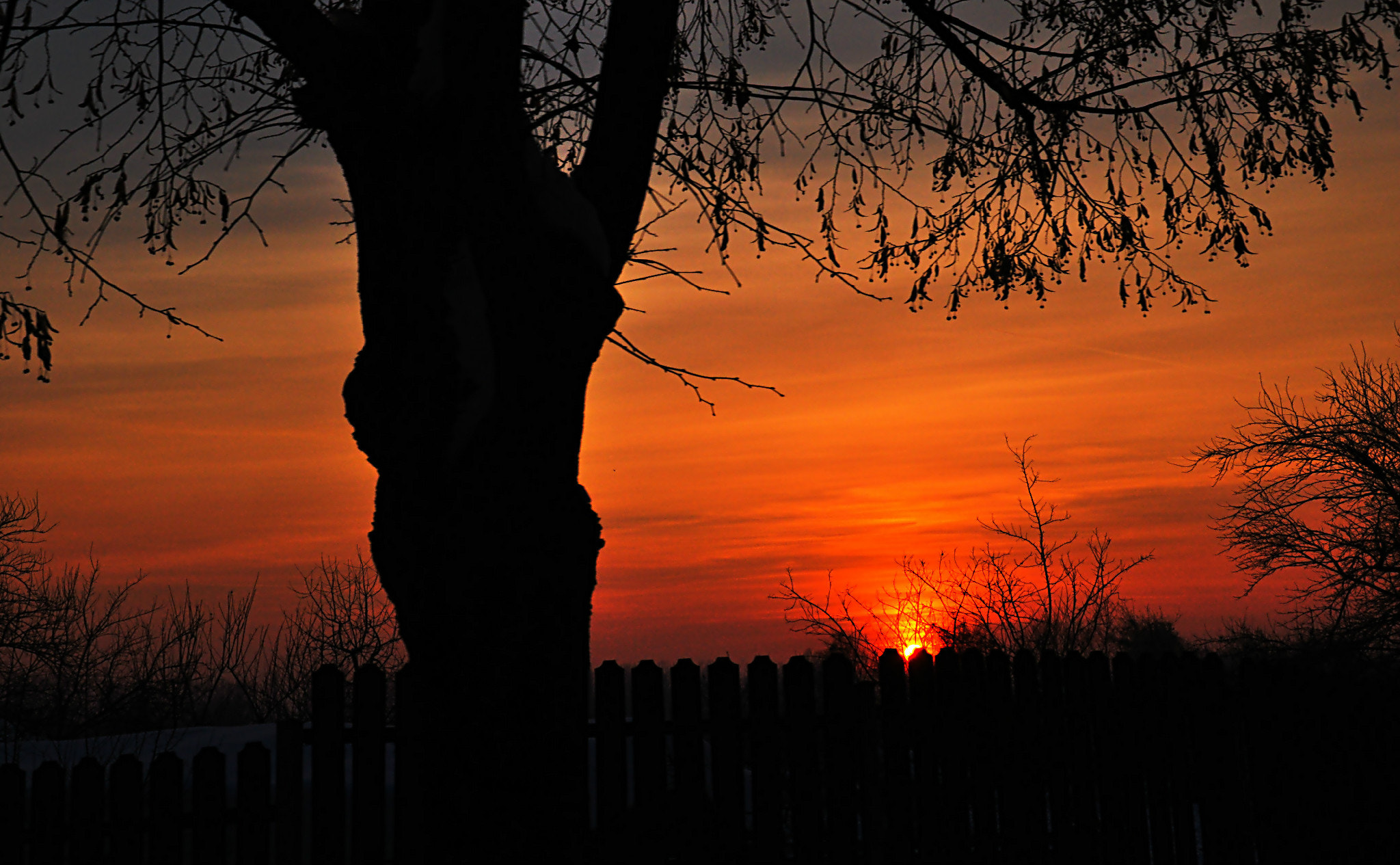 Photograph Old tree and sunset... by Mihaela Floriana Soare on 500px