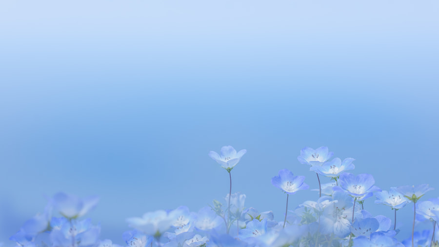 Photograph toward the blue sky by Miyako Koumura on 500px