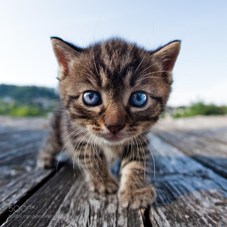 Photograph Curiosity by Henrik Spranz on 500px