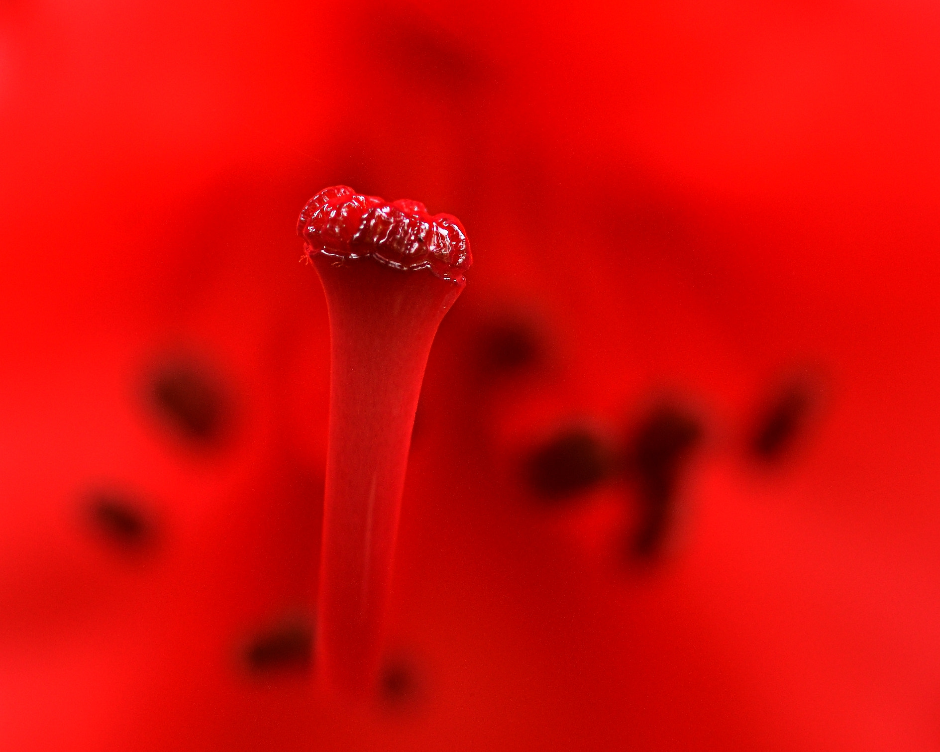 Photograph Red by Marc Koczwara on 500px