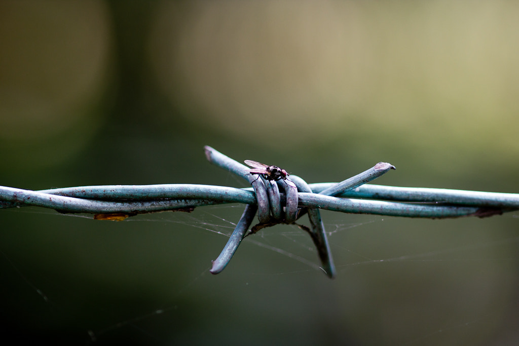 Photograph Barbed Wire by Adam Browning on 500px