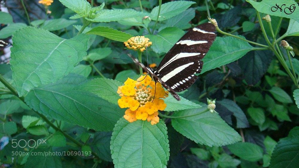 Photograph mariposaas :) by Nerea Gonzalo García on 500px