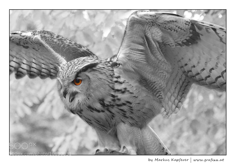 Photograph Mystic Eyes by Markus Kapferer on 500px