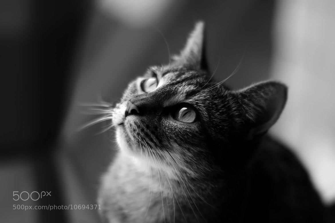 Photograph Harley by katyjean on 500px