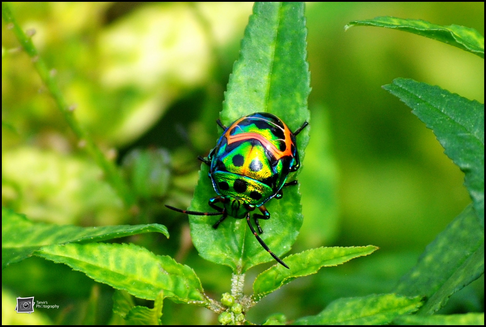 Photograph Insect by Tanvir Khan on 500px