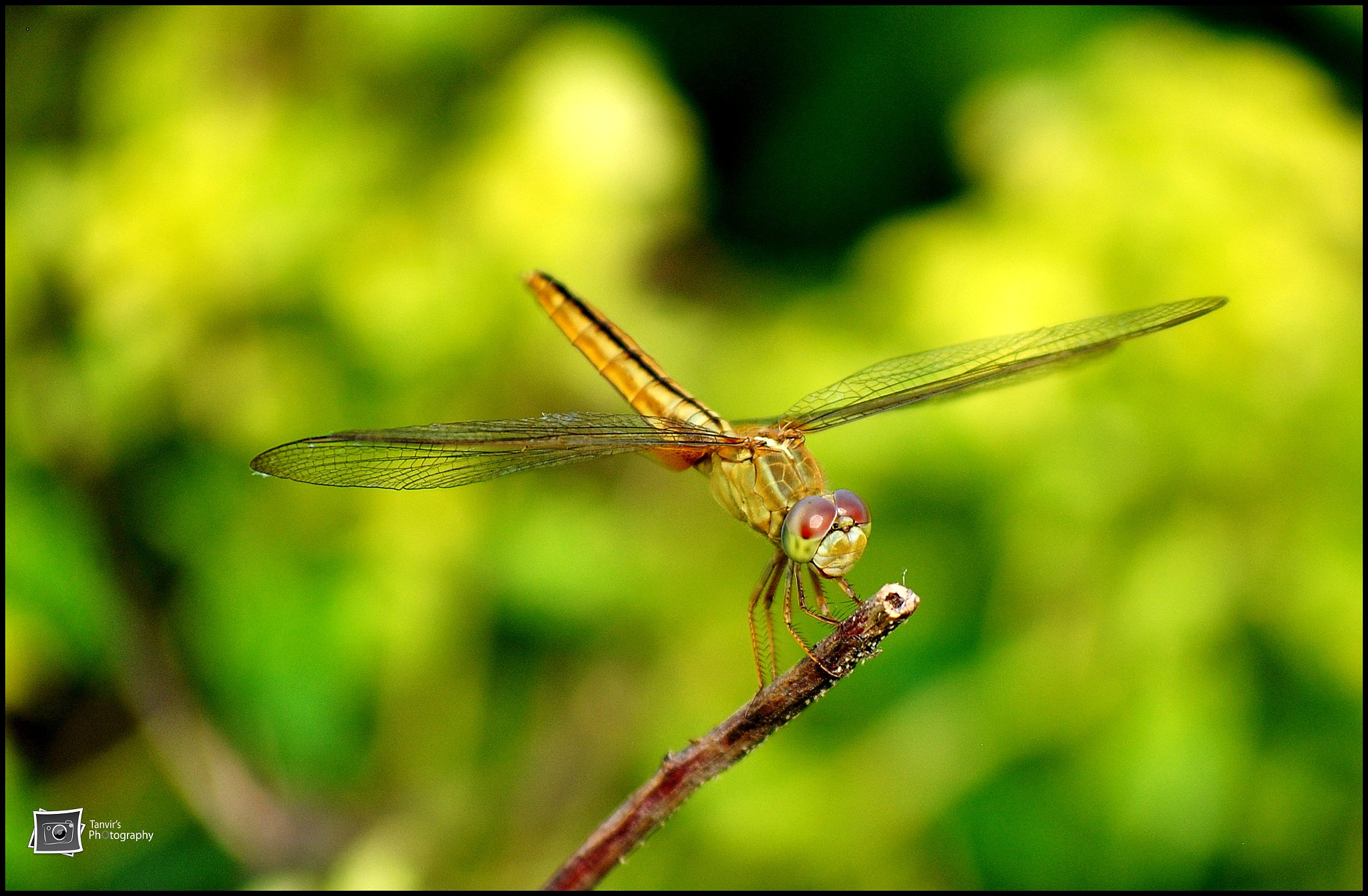 Photograph Dragonfly by Tanvir Khan on 500px