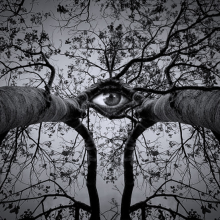 Trees must have eyes