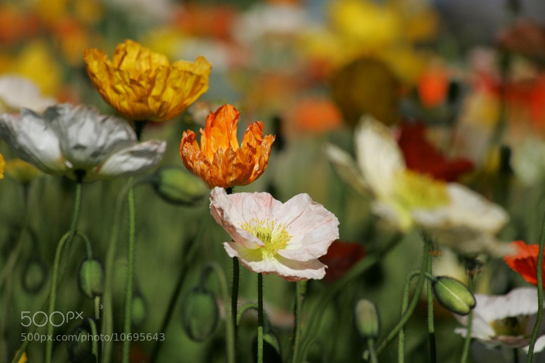 Photograph Parc Floral by Nicolas SALVA on 500px