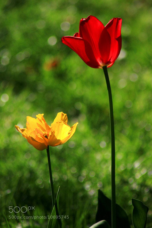 Photograph Parc Floral #2 by Nicolas SALVA on 500px