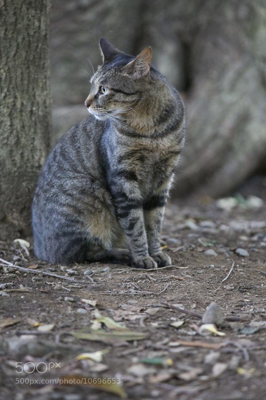 Photograph Stray cat by Joe Motohashi on 500px