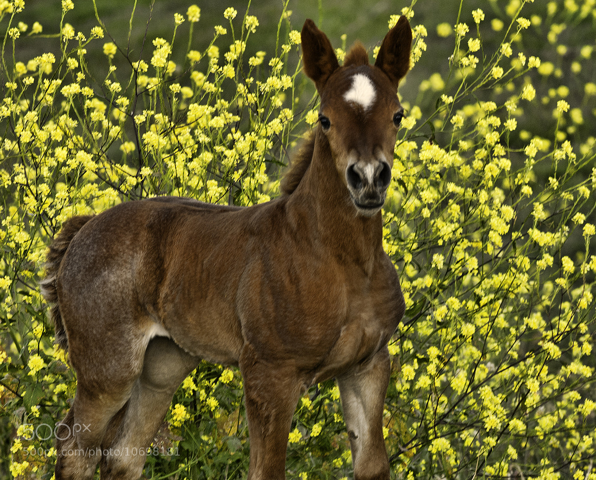 Photograph Wild Mustang by Roy Bozarth on 500px