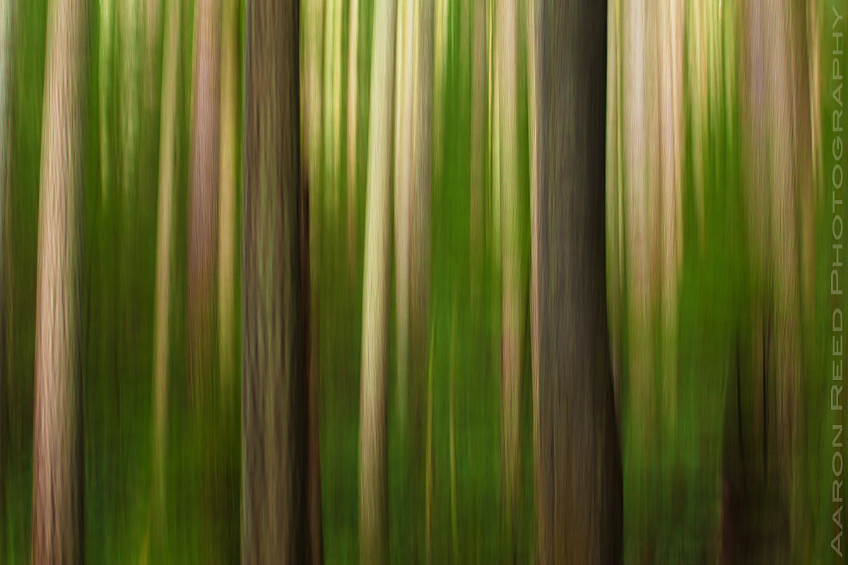 Photograph Forest Whispers by Aaron Reed on 500px