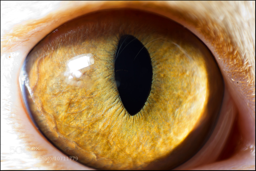 Photograph eye structures by Stepan Luschi on 500px