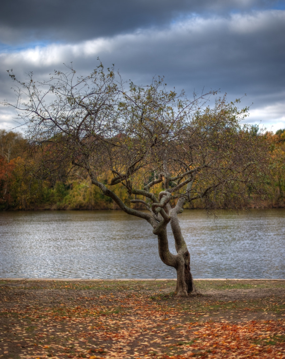 Photograph One Tree by Eric Lee on 500px
