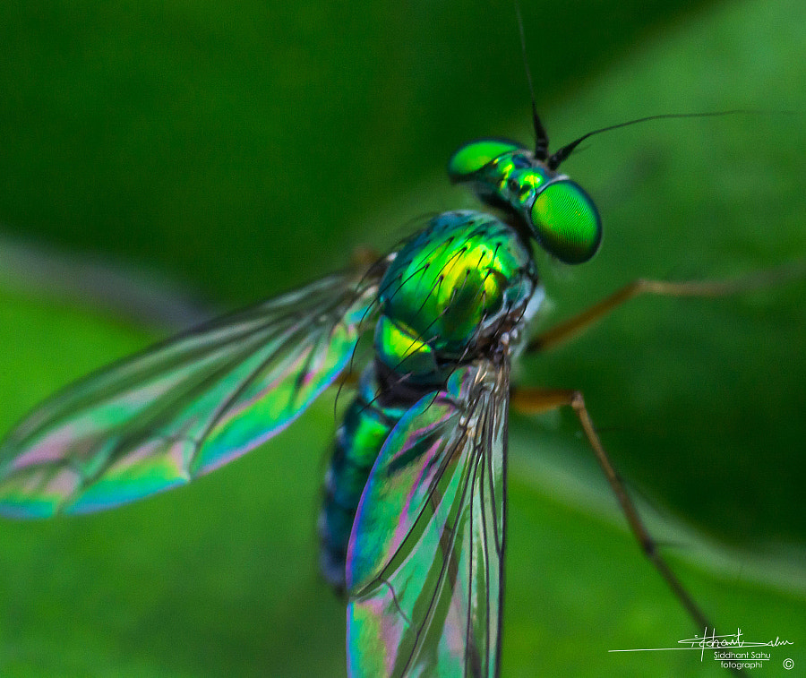 Photograph Green Fly by Siddhant  Sahu on 500px