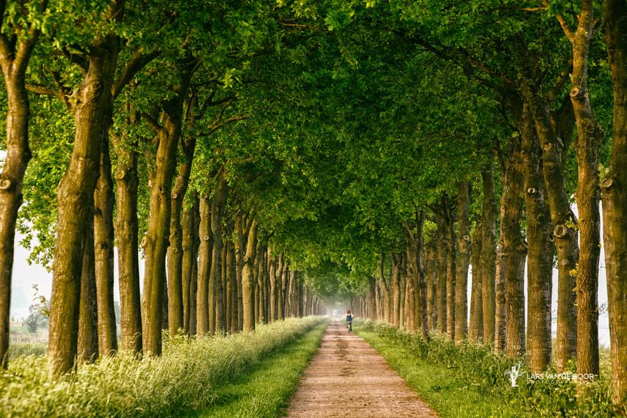 towards summer by Lars van de Goor on 500px.com
