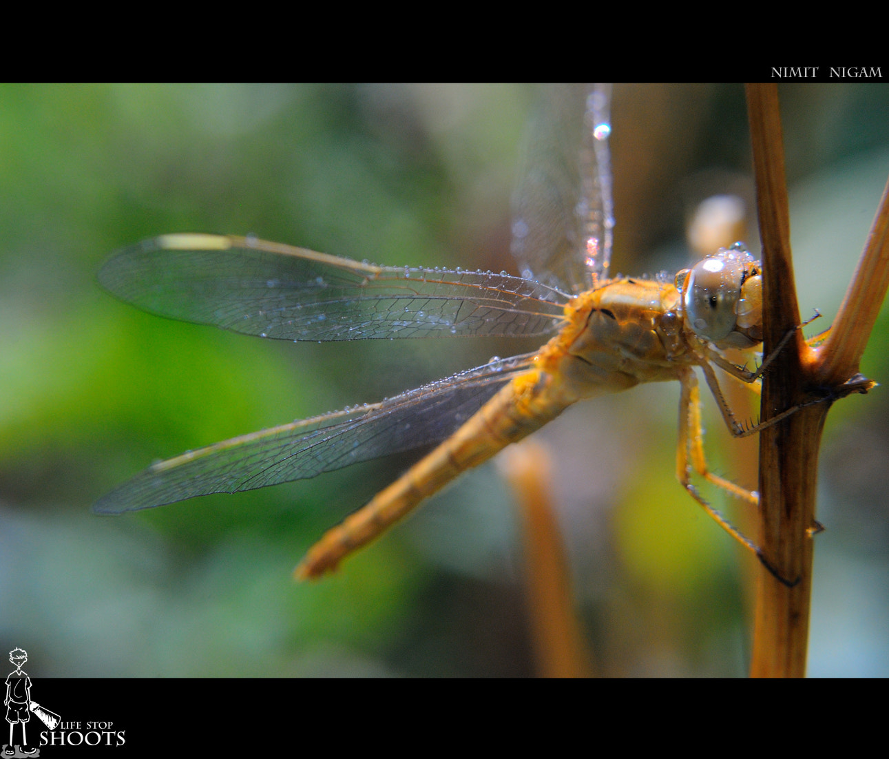 Photograph Close To Dragon Fly... by Nimit Nigam on 500px