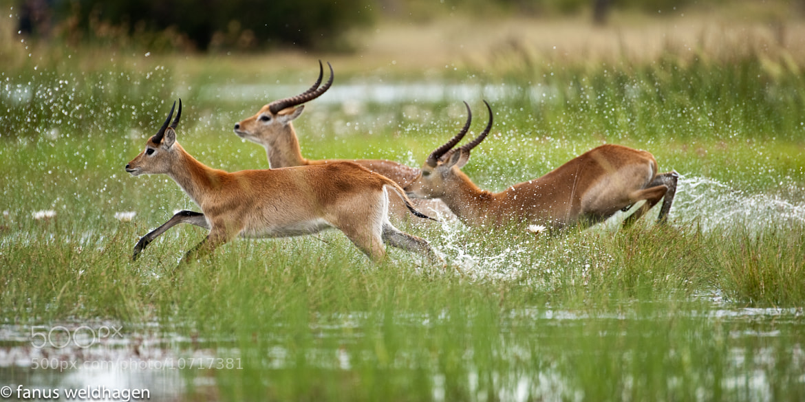 Photograph Running wild by Fanus Weldhagen on 500px