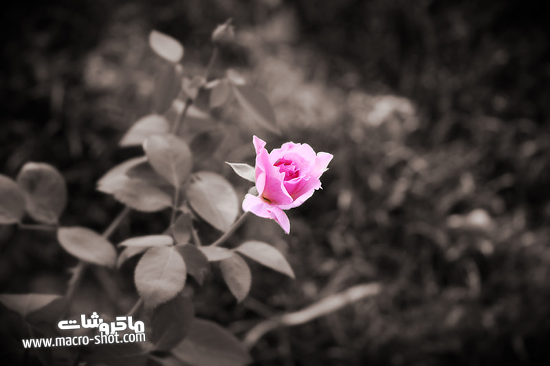 Photograph Alone by Parissa Allahyari on 500px