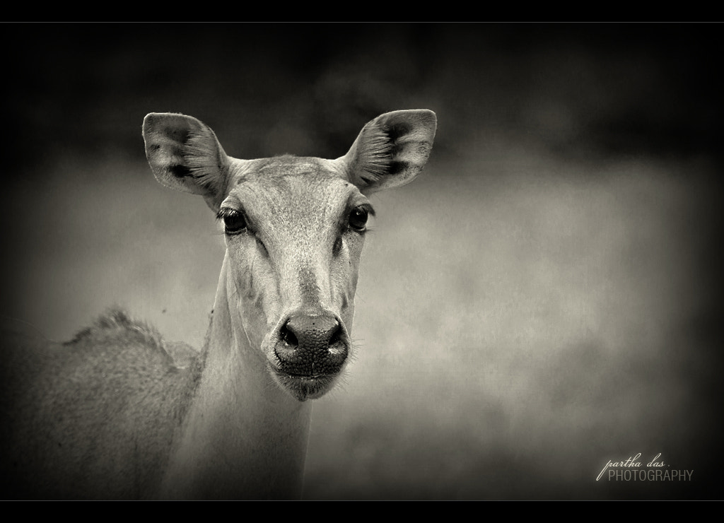 Photograph looking at you! by Partha Das on 500px