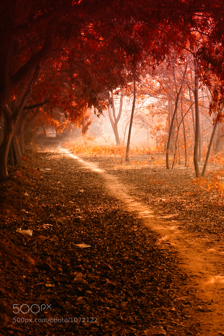 Photograph The Way Through The Woods by Rajat Gaur on 500px