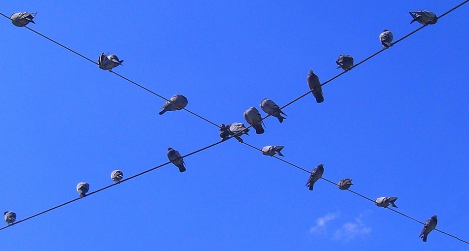 Photograph perched birds of telegraph wires by Mustafa  Gül on 500px