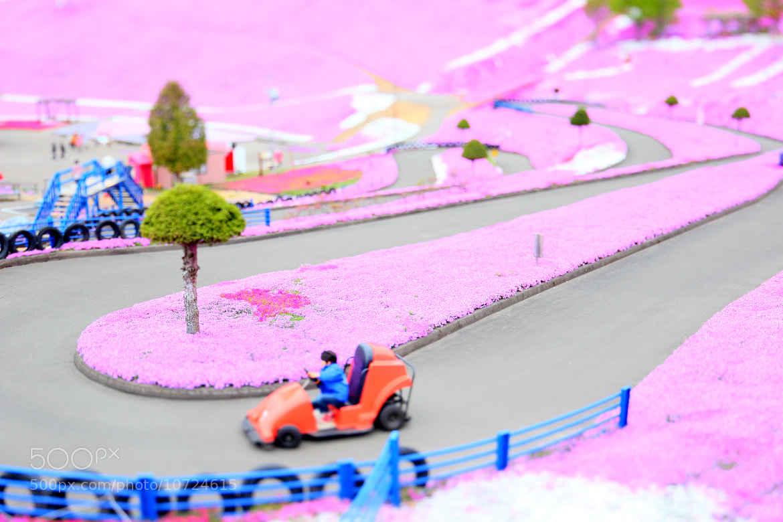 Photograph 音速の貴公子(F1 Racer) by hirosima munetaka on 500px