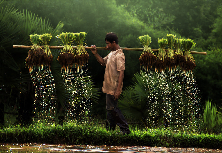 Photograph A farmer and water dripping by Yothin Insuk on 500px