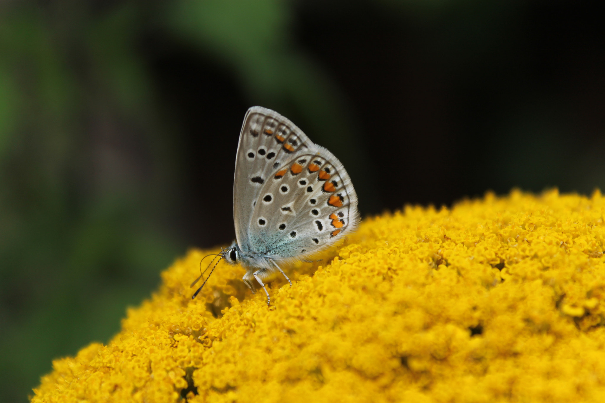 Photograph Butterfly by Rok Frelih on 500px
