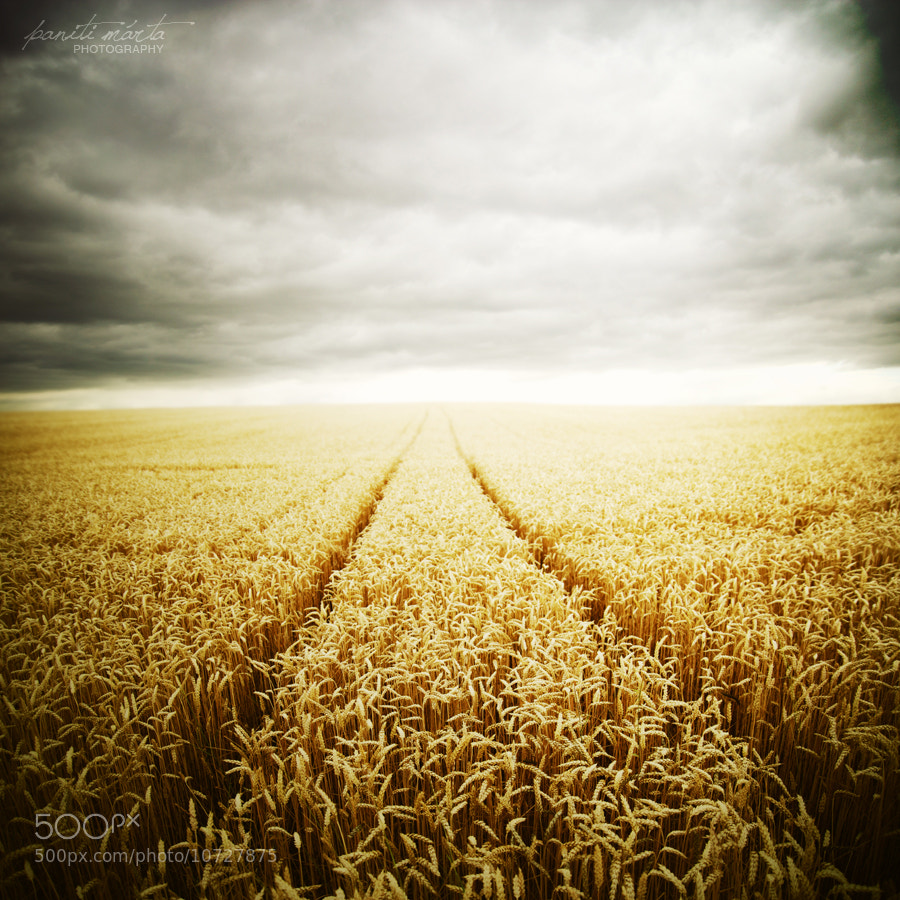 Photograph Wheat field on a stormy day by Paniti Márta on 500px