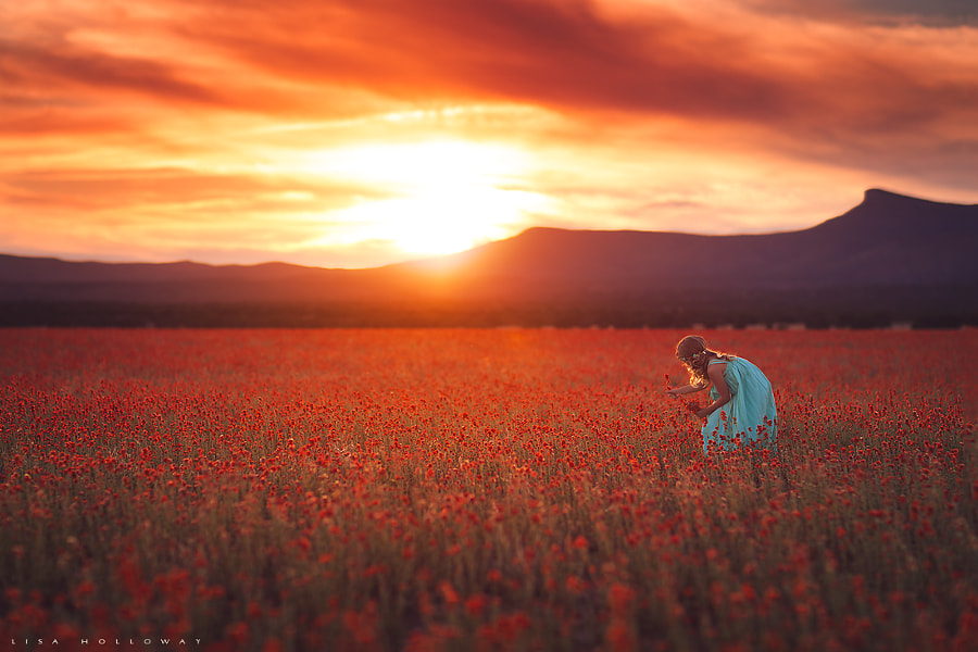 Photograph Field of Fire by Lisa Holloway on 500px