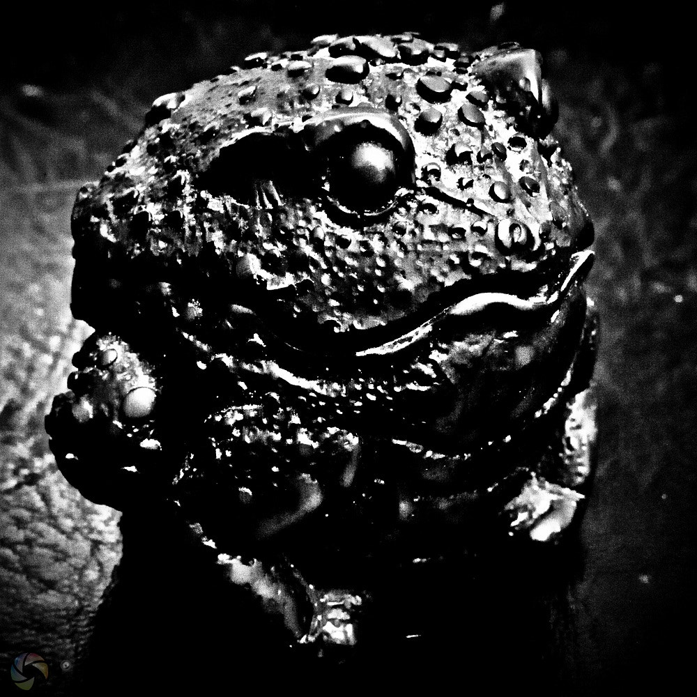 Photograph This Is An Artificial Toad by Ali Malek on 500px