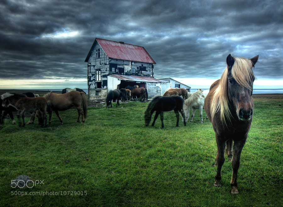 Photograph Horses at abandoned farm by Jon Hilmarsson on 500px