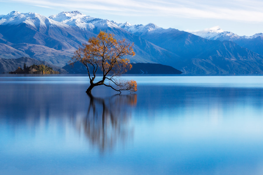 Photograph Lone Willow Tree Reflection by Hafiz Ismail on 500px