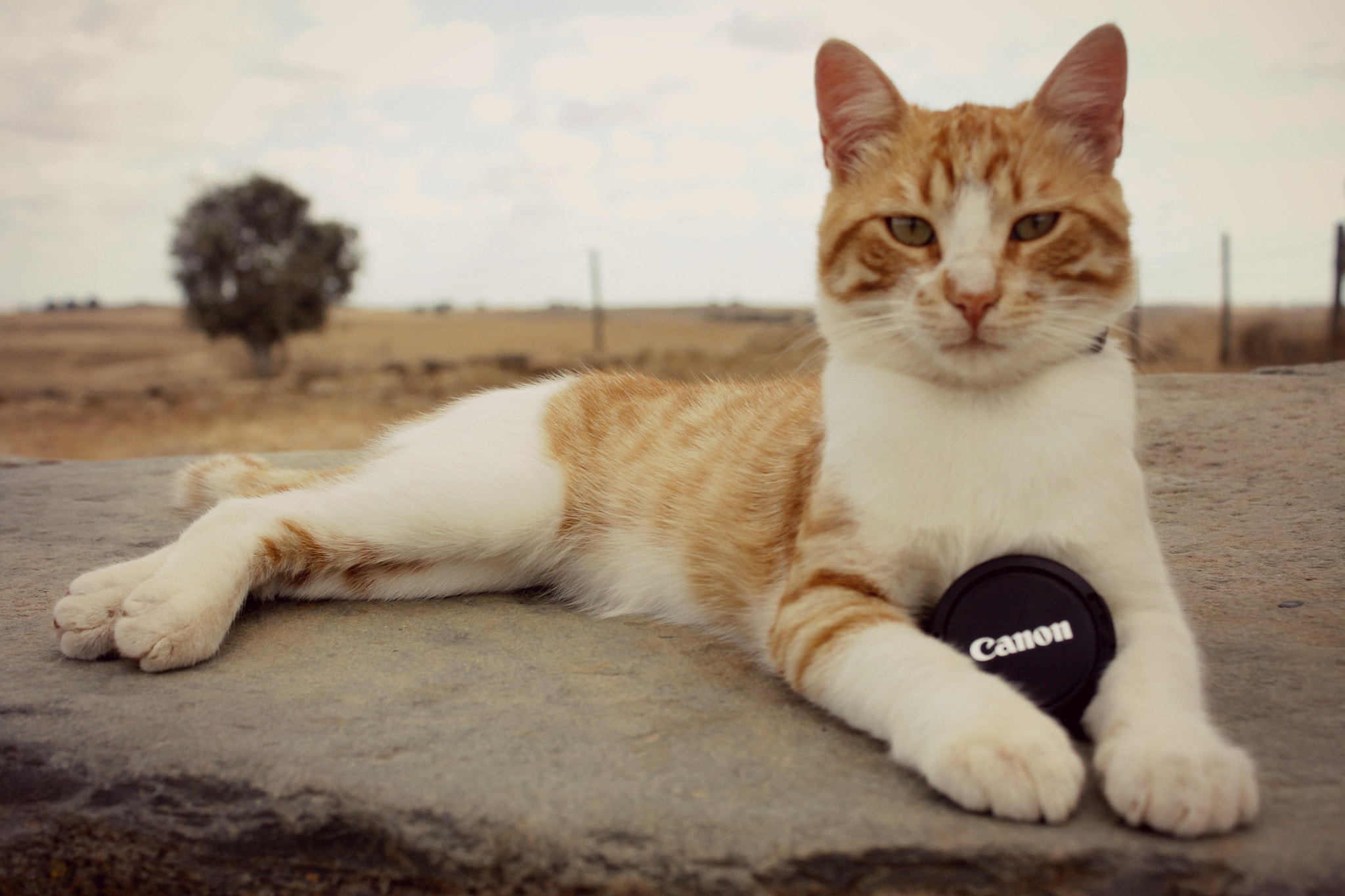 Photograph Cat&Canon II by Rita  A.  on 500px